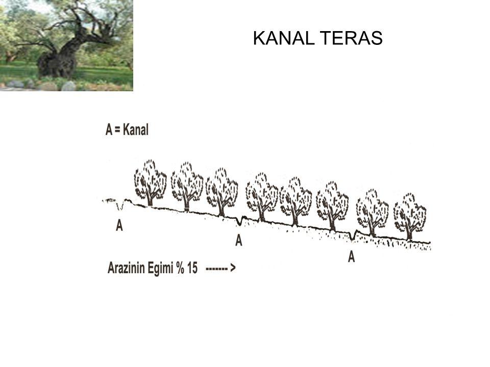 KANAL TERAS