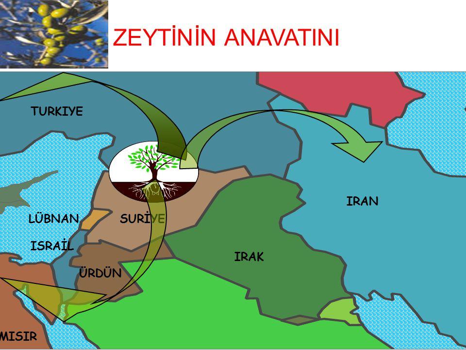 TURKIYE SURİYE IRAN ISRAİL ÜRDÜN IRAK MISIR LÜBNAN ZEYTİNİN ANAVATINI