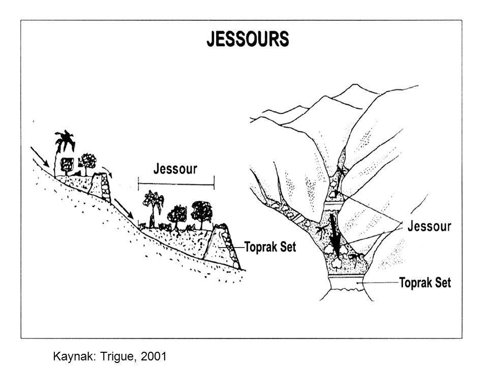 Kaynak: Trigue, 2001