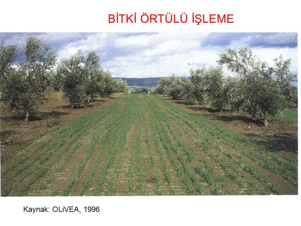 BİTKİ ÖRTÜLÜ İŞLEME Kaynak: OLiVEA, 1996