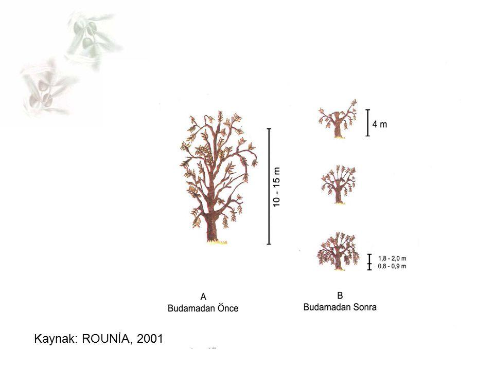 Kaynak: ROUNİA, 2001