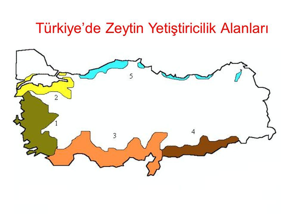 Türkiye'de Zeytin Yetiştiricilik Alanları