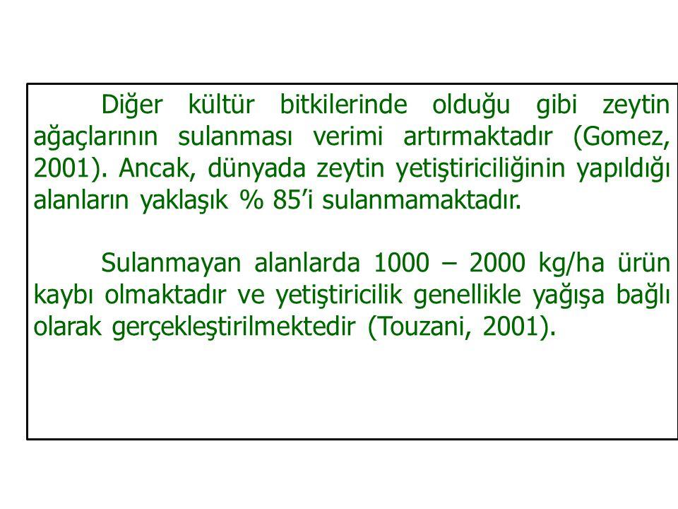 Diğer kültür bitkilerinde olduğu gibi zeytin ağaçlarının sulanması verimi artırmaktadır (Gomez, 2001).