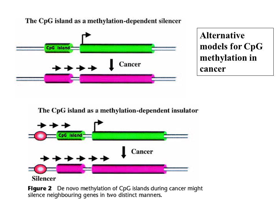 Alternative models for CpG methylation in cancer