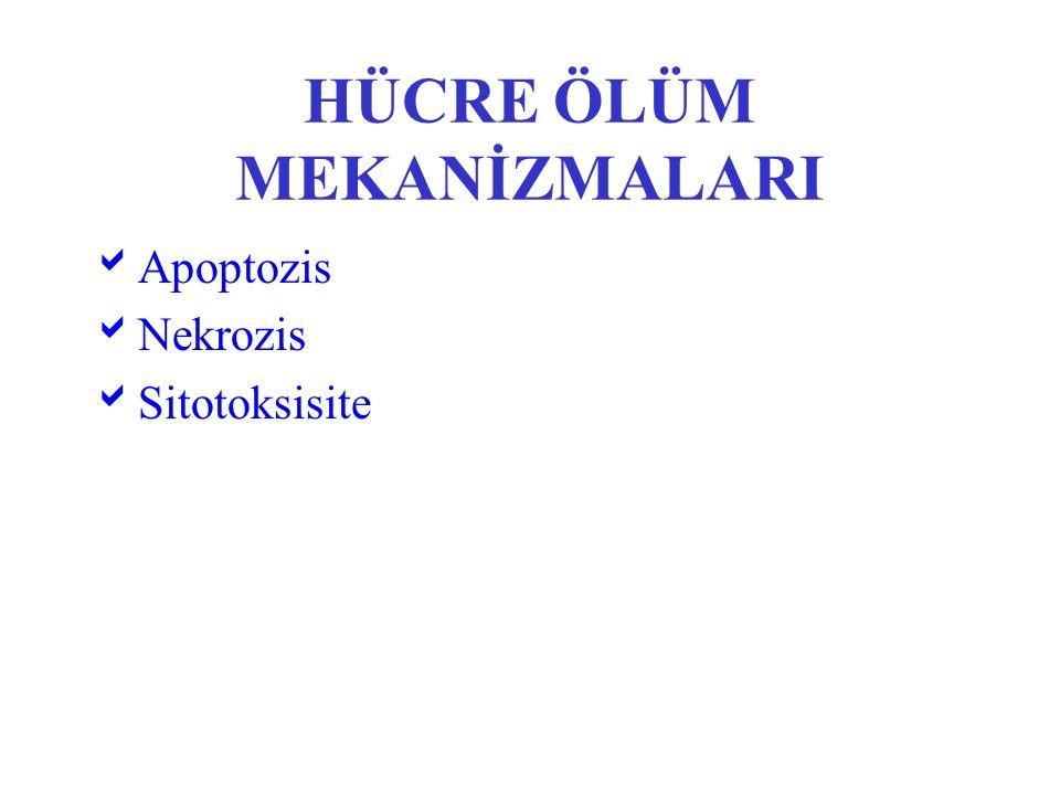 HÜCRE ÖLÜM MEKANİZMALARI  Apoptozis  Nekrozis  Sitotoksisite
