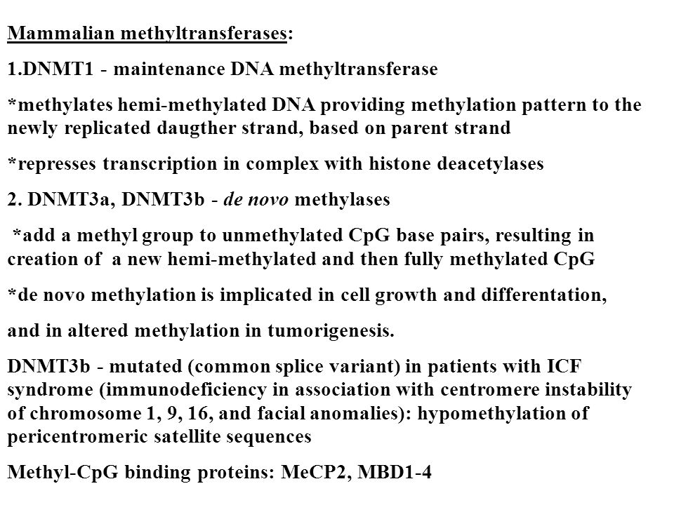 Mammalian methyltransferases: 1.DNMT1 - maintenance DNA methyltransferase *methylates hemi-methylated DNA providing methylation pattern to the newly replicated daugther strand, based on parent strand *represses transcription in complex with histone deacetylases 2.