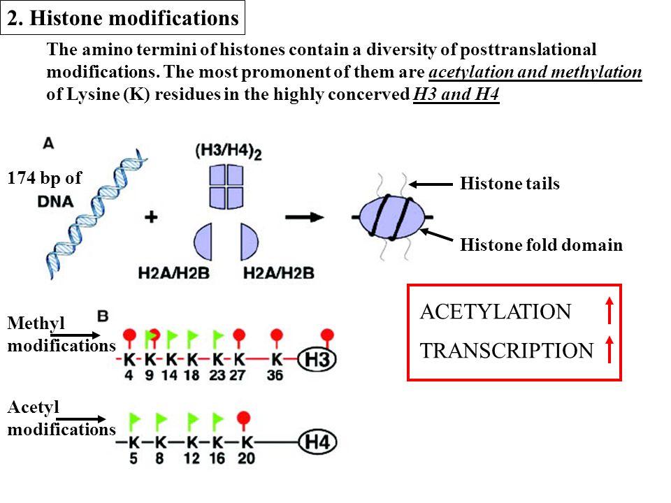 The amino termini of histones contain a diversity of posttranslational modifications.
