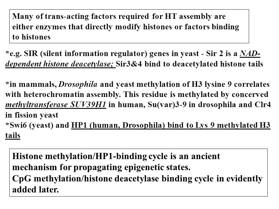 Many of trans-acting factors required for HT assembly are either enzymes that directly modify histones or factors binding to histones *e.g. SIR (silen