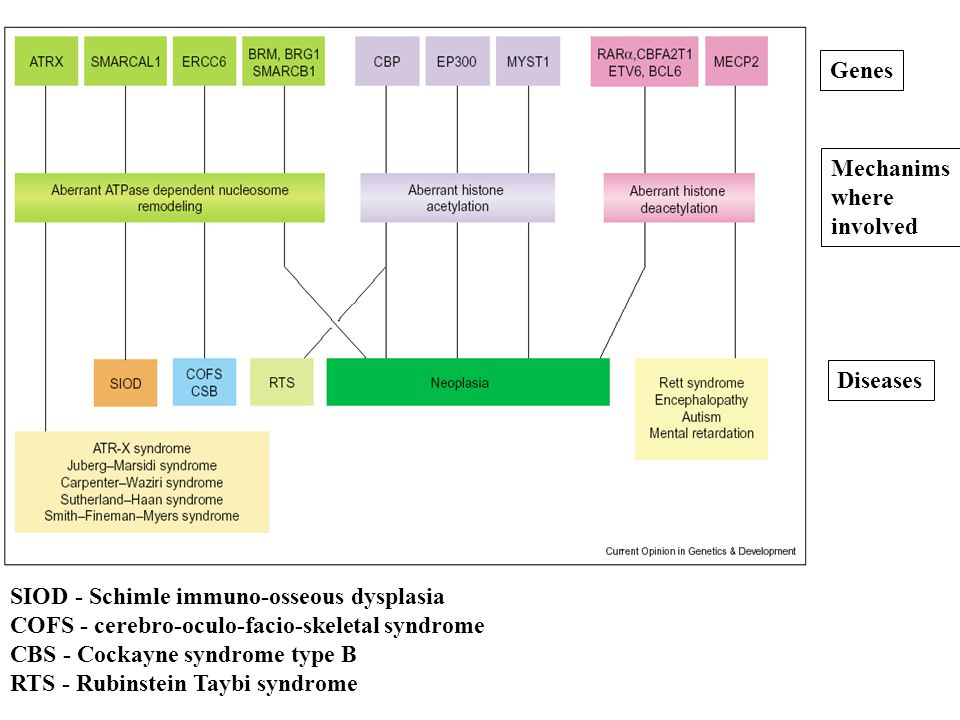 Genes Mechanims where involved Diseases SIOD - Schimle immuno-osseous dysplasia COFS - cerebro-oculo-facio-skeletal syndrome CBS - Cockayne syndrome type B RTS - Rubinstein Taybi syndrome