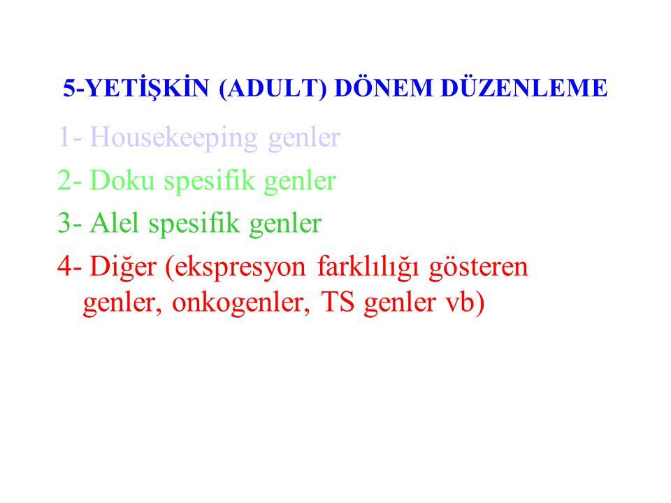 EPİGENETİKTE (SOMATİK KALITIM) ETKİLİ MEKANİZMALAR I- DNA METİLASYONU II- FOSFORİLASYON III- ASETİLASYON IV- UBİQUTİNASYON V- HIGH MOBIL NON-HISTON PROTEİNLER