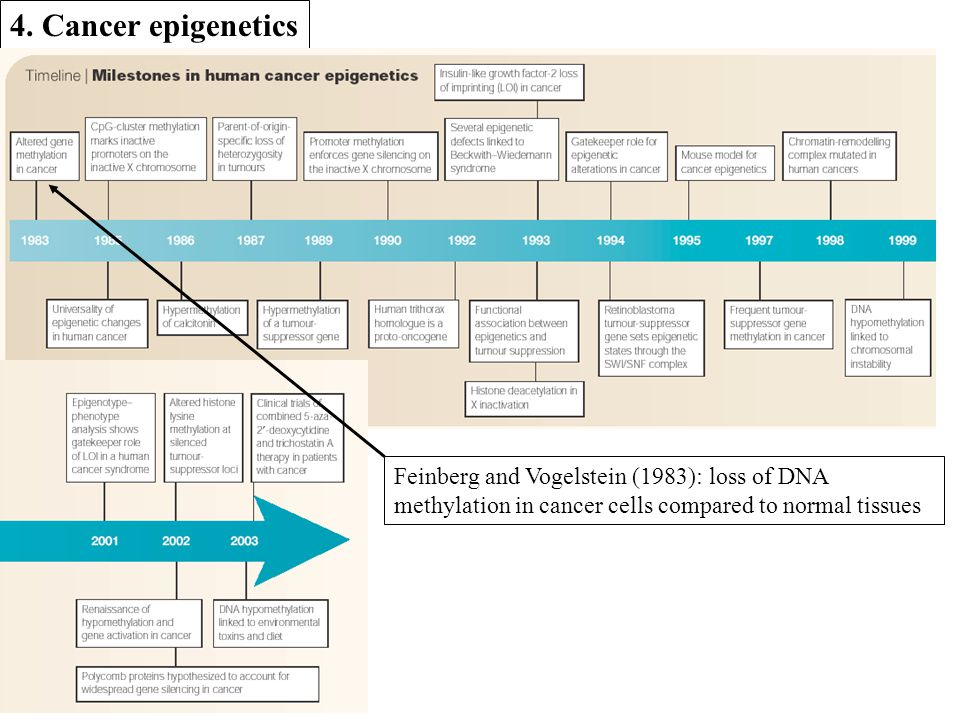 4. Cancer epigenetics Feinberg and Vogelstein (1983): loss of DNA methylation in cancer cells compared to normal tissues
