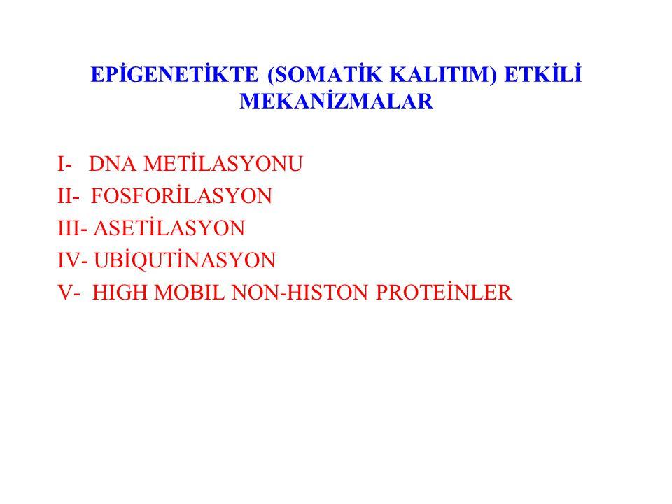 EPİGENETİKTE (SOMATİK KALITIM) ETKİLİ MEKANİZMALAR I- DNA METİLASYONU II- FOSFORİLASYON III- ASETİLASYON IV- UBİQUTİNASYON V- HIGH MOBIL NON-HISTON PR