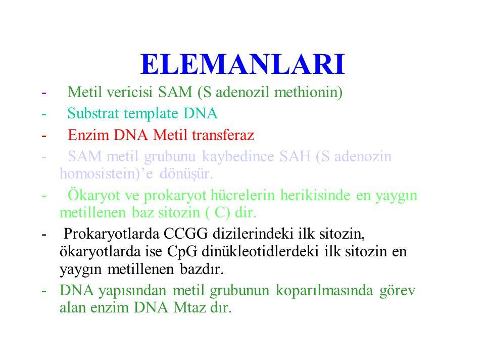 ELEMANLARI - Metil vericisi SAM (S adenozil methionin) - Substrat template DNA - Enzim DNA Metil transferaz - SAM metil grubunu kaybedince SAH (S aden