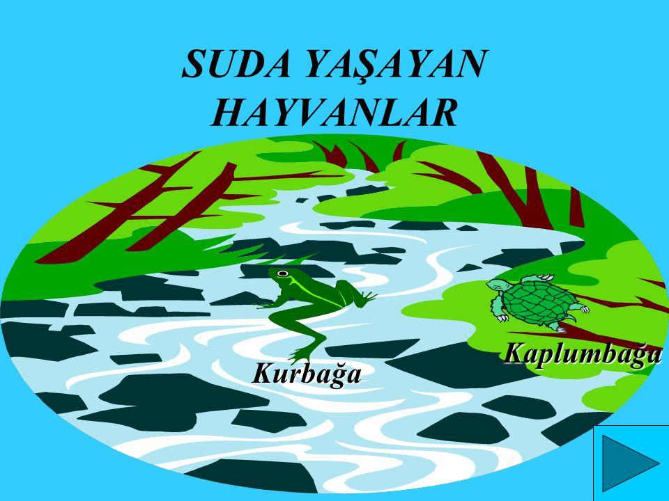 DENİZDE YAŞAYAN HAYVANLAR Balık Yengeç Yunus Midye Deniz Yıldızı Istakoz