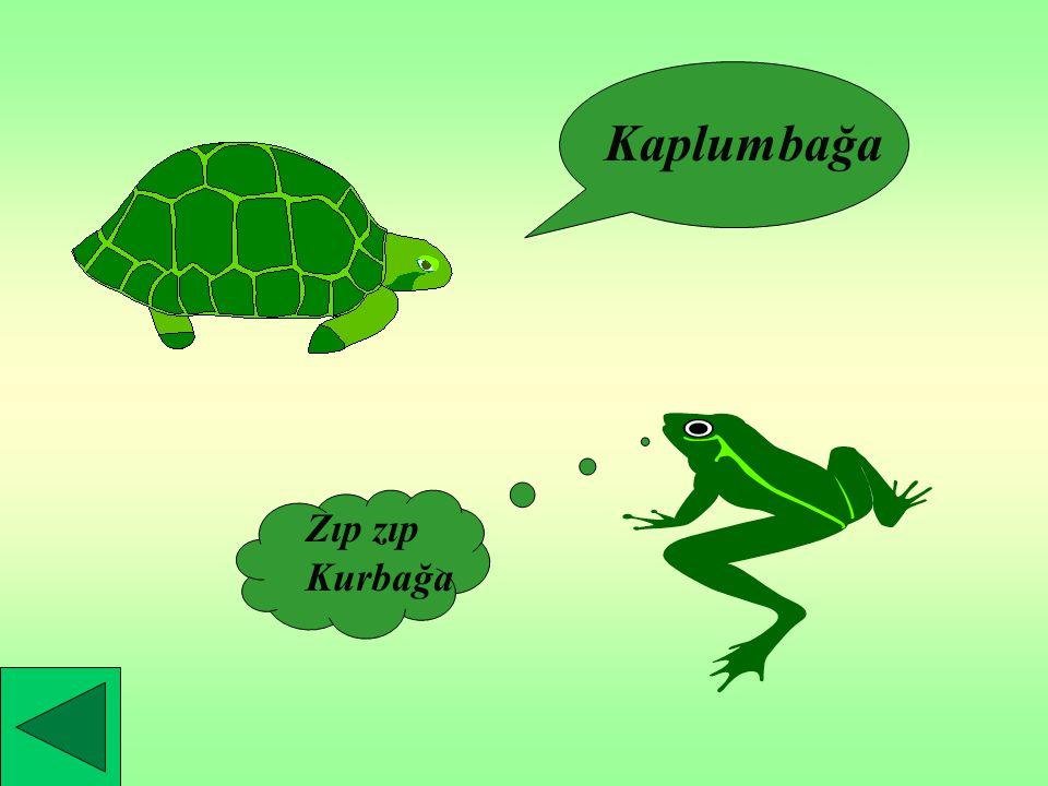 SUDA YAŞAYAN HAYVANLAR Kurbağa Kaplumbağa