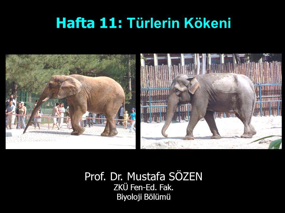 Hafta 11: Türlerin Kökeni Prof. Dr. Mustafa SÖZEN ZKÜ Fen-Ed. Fak. Biyoloji Bölümü