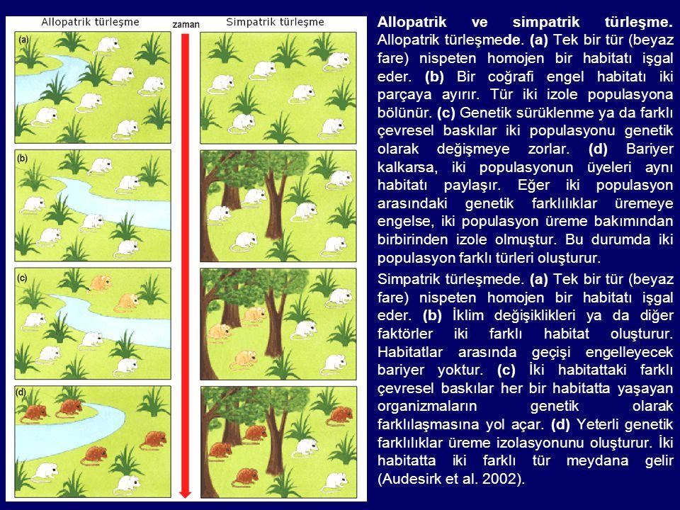 Allopatrik ve simpatrik türleşme. Allopatrik türleşmede. (a) Tek bir tür (beyaz fare) nispeten homojen bir habitatı işgal eder. (b) Bir coğrafi engel