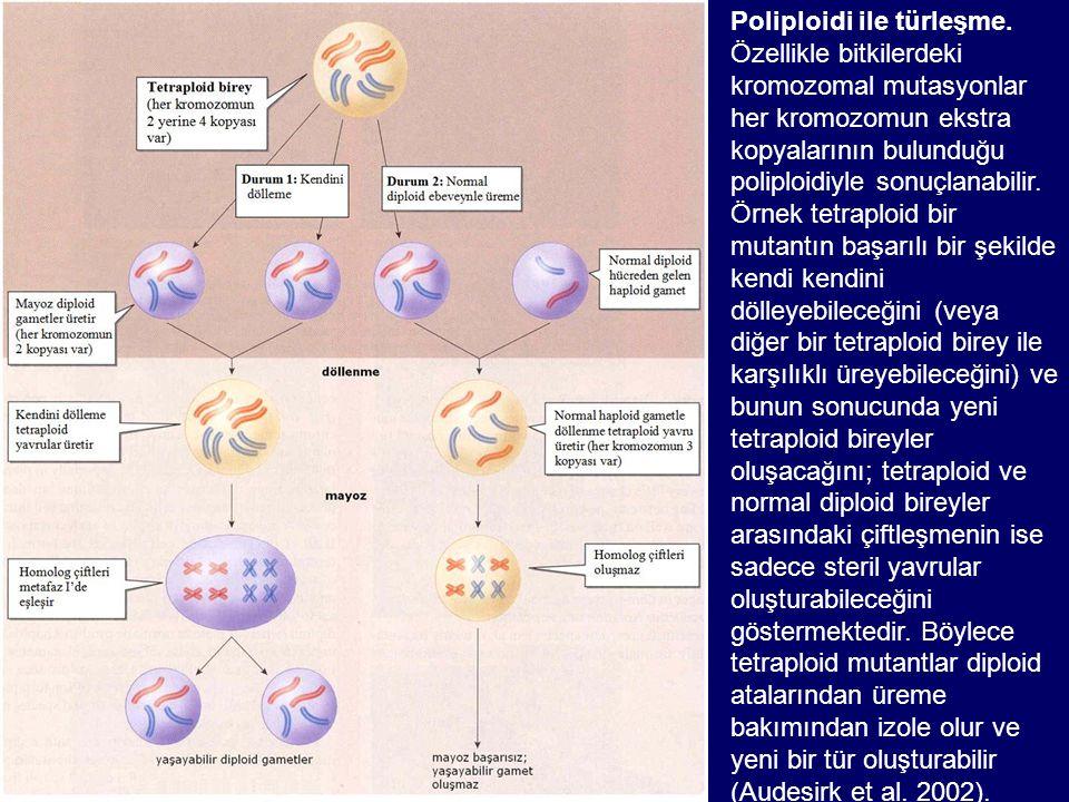 Poliploidi ile türleşme. Özellikle bitkilerdeki kromozomal mutasyonlar her kromozomun ekstra kopyalarının bulunduğu poliploidiyle sonuçlanabilir. Örne