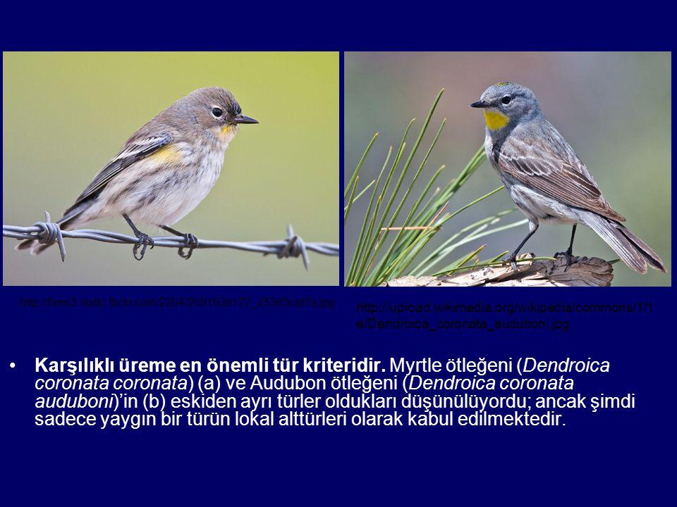 Karşılıklı üreme en önemli tür kriteridir. Myrtle ötleğeni (Dendroica coronata coronata) (a) ve Audubon ötleğeni (Dendroica coronata auduboni)'in (b)