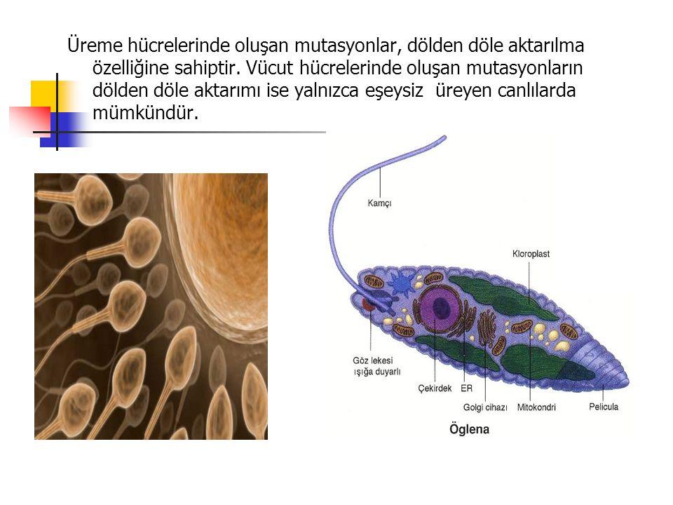 Üreme hücrelerinde oluşan mutasyonlar, dölden döle aktarılma özelliğine sahiptir. Vücut hücrelerinde oluşan mutasyonların dölden döle aktarımı ise yal