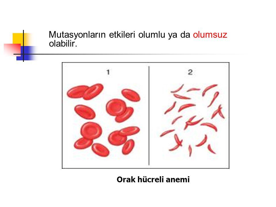 Mutasyonların etkileri olumlu ya da olumsuz olabilir. Orak hücreli anemi