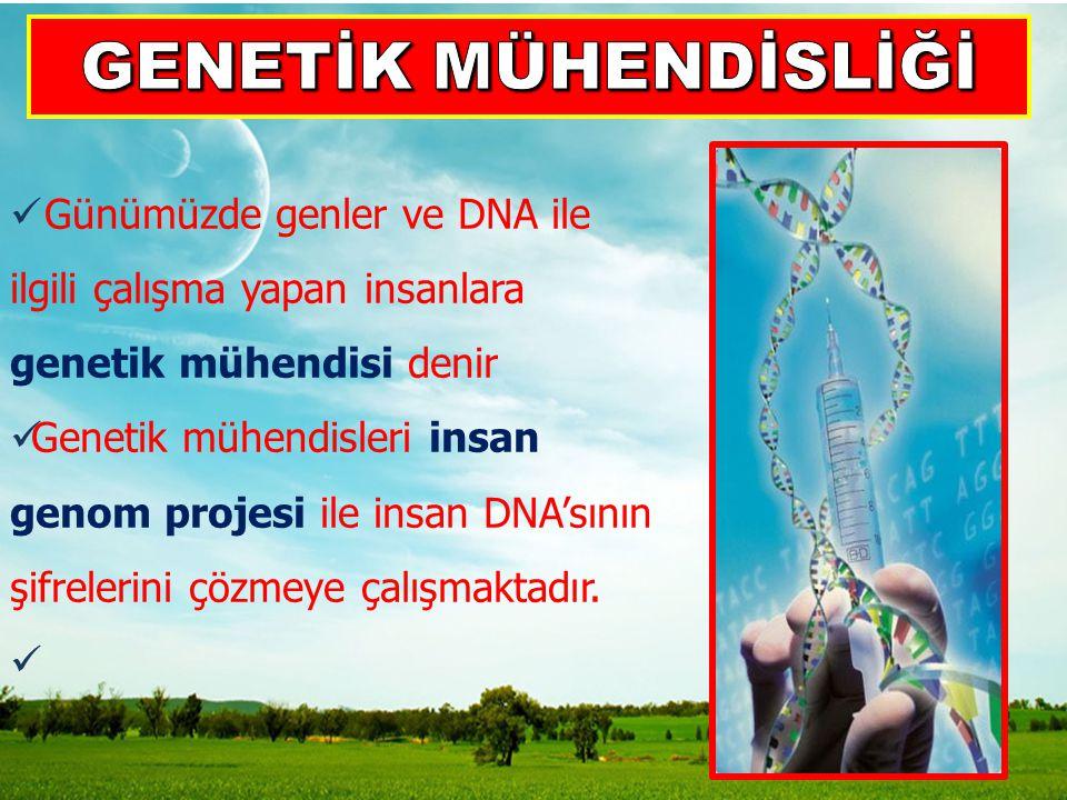 Günümüzde genler ve DNA ile ilgili çalışma yapan insanlara genetik mühendisi denir Genetik mühendisleri insan genom projesi ile insan DNA'sının şifrel