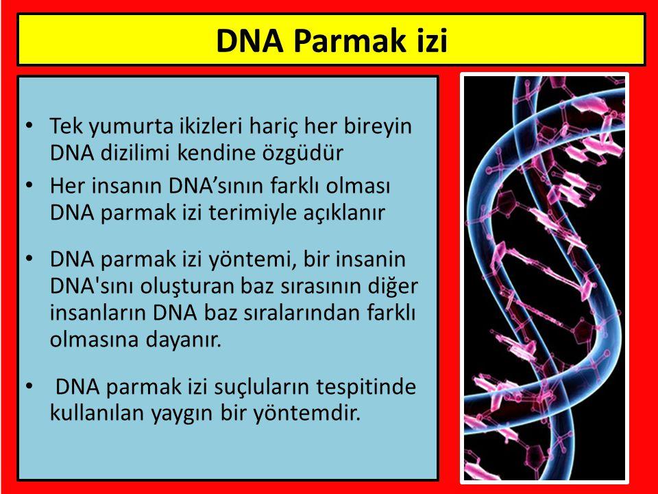Tek yumurta ikizleri hariç her bireyin DNA dizilimi kendine özgüdür Her insanın DNA'sının farklı olması DNA parmak izi terimiyle açıklanır DNA parmak