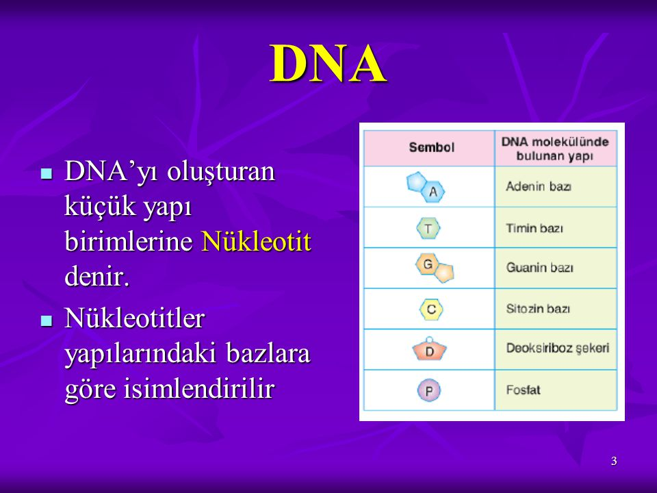 4 Nükleotidi oluşturan yapılar Organik bazŞeker Fosfat * Adenin * Guanin * Sitozin * Timin * Deoksiriboz şekeri