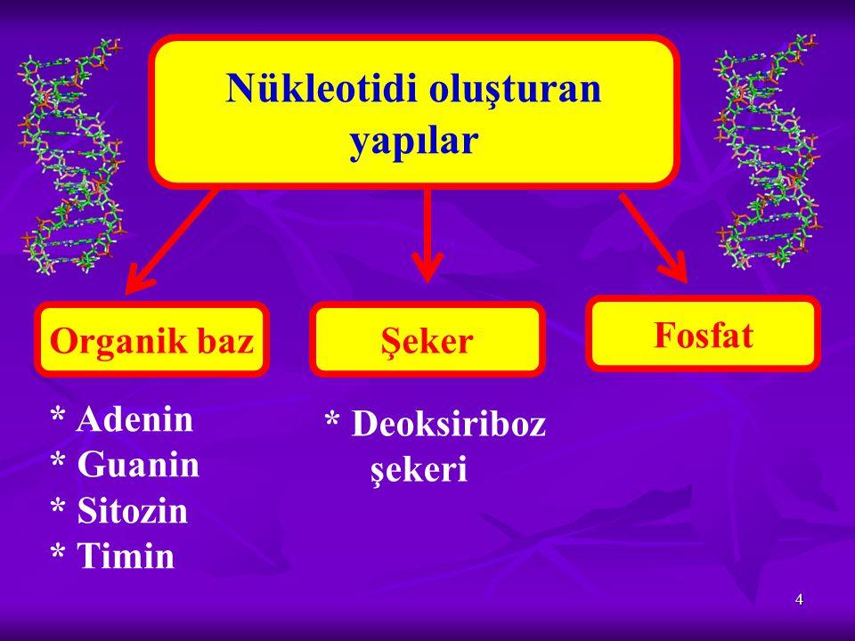 5 DNA Canlılarda çeşitliliği DNA'ların farklı olmasından kaynaklanır.