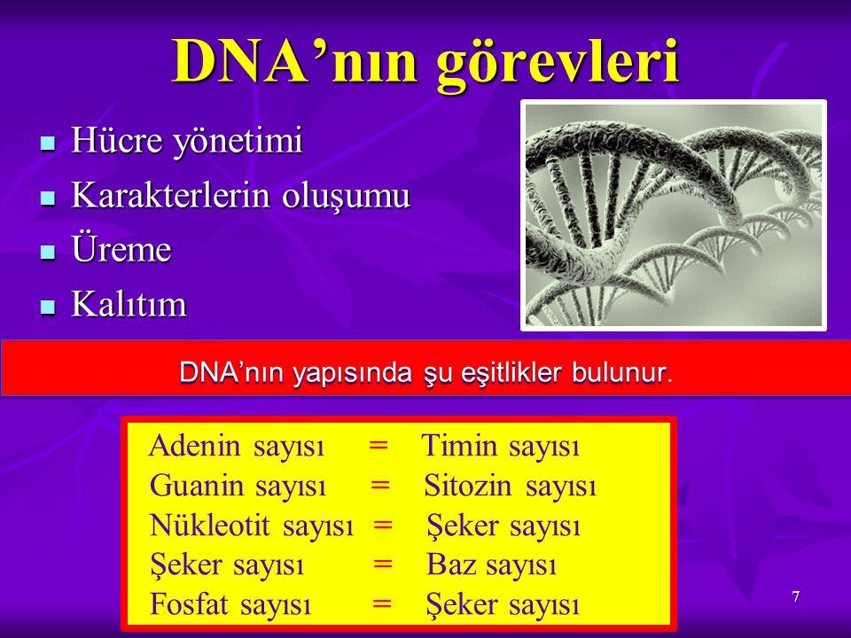 DNA EŞLENMESİ 8 Bir DNA'dan aynı özelliklerde 2 yeni DNA üretilmesidir Bir DNA'dan aynı özelliklerde 2 yeni DNA üretilmesidir Amaç kalıtsal bilgilerin yeni hücrelere aktarılmasıdır Amaç kalıtsal bilgilerin yeni hücrelere aktarılmasıdır Hücre bölünmesinden önce gerçekleşir Hücre bölünmesinden önce gerçekleşir