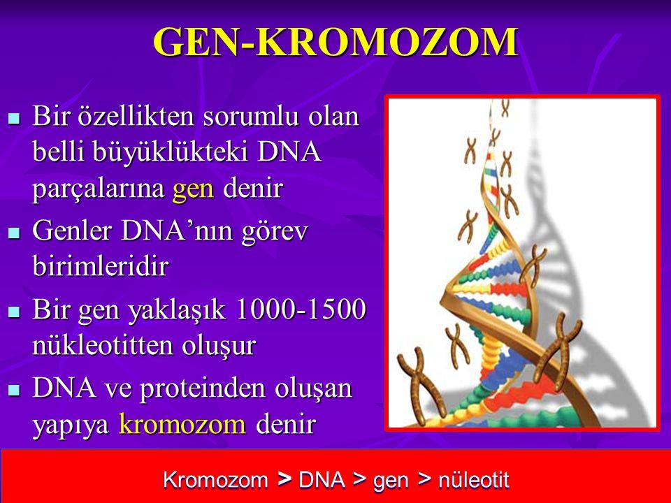 GEN-KROMOZOM Bir özellikten sorumlu olan belli büyüklükteki DNA parçalarına gen denir Bir özellikten sorumlu olan belli büyüklükteki DNA parçalarına g