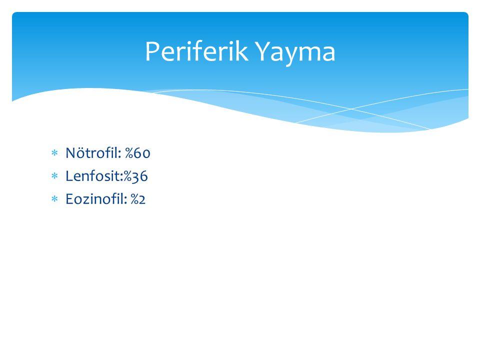  Nötrofil: %60  Lenfosit:%36  Eozinofil: %2 Periferik Yayma