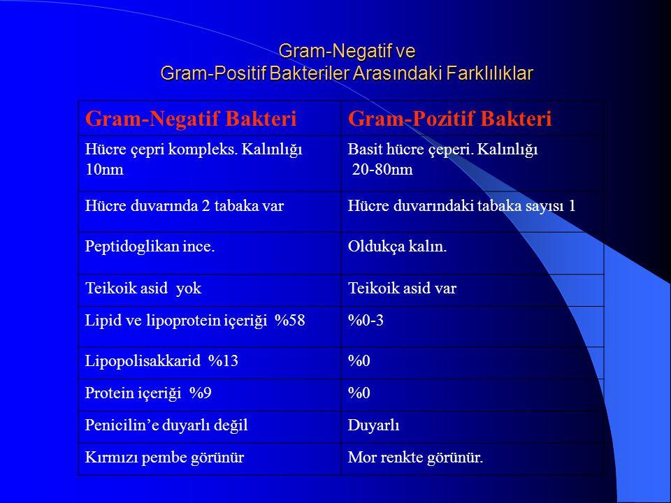 Gram-Negatif ve Gram-Positif Bakteriler Arasındaki Farklılıklar Gram-Negatif BakteriGram-Pozitif Bakteri Hücre çepri kompleks.
