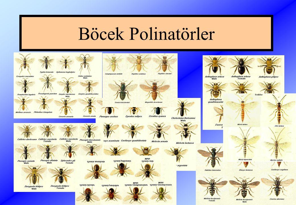 Böcek Polinatörler