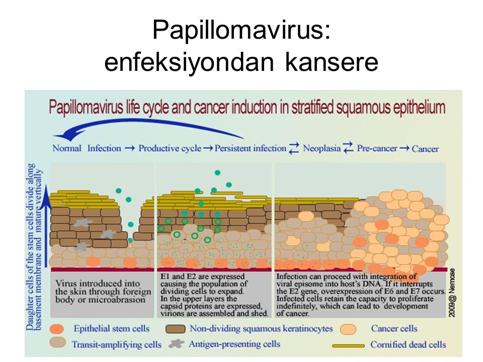 Papillomavirus: enfeksiyondan kansere