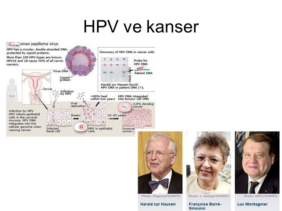 HPV ve kanser
