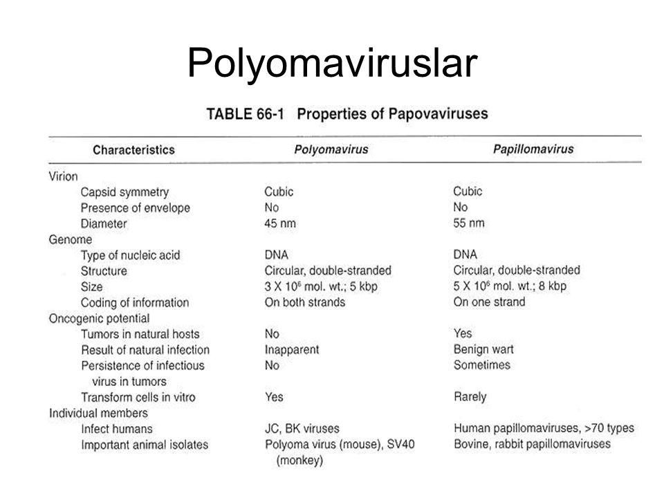 Polyomaviruslar