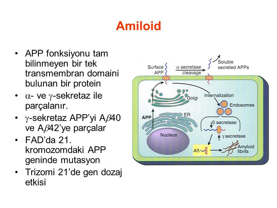 Amiloid APP fonksiyonu tam bilinmeyen bir tek transmembran domaini bulunan bir protein  - ve  -sekretaz ile parçalanır.  -sekretaz APP'yi A  40 ve
