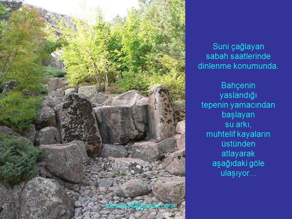 Japonlar sempati duymuşlar, Anadolunun ortasına bu bahçenin oluşması ve bakımı için para harcamışlar.