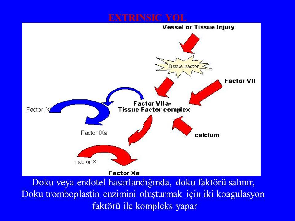 Doku veya endotel hasarlandığında, doku faktörü salınır, Doku tromboplastin enzimini oluşturmak için iki koagulasyon faktörü ile kompleks yapar EXTRIN