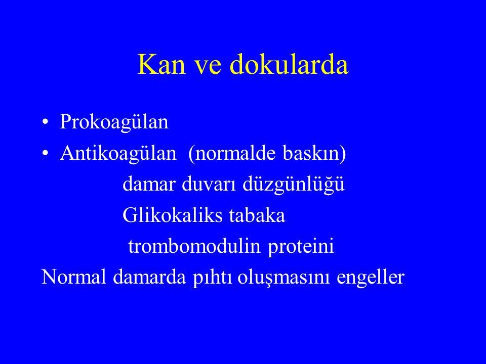 Kan ve dokularda Prokoagülan Antikoagülan (normalde baskın) damar duvarı düzgünlüğü Glikokaliks tabaka trombomodulin proteini Normal damarda pıhtı olu