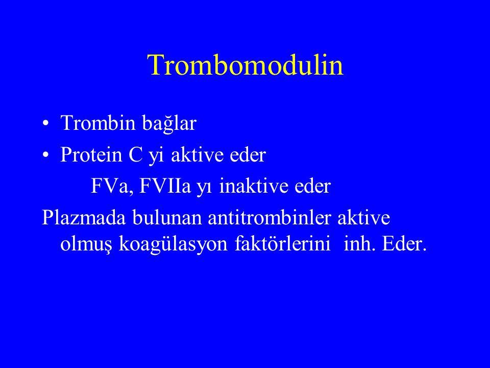 Trombomodulin Trombin bağlar Protein C yi aktive eder FVa, FVIIa yı inaktive eder Plazmada bulunan antitrombinler aktive olmuş koagülasyon faktörlerin