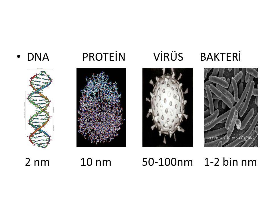 DNA PROTEİN VİRÜS BAKTERİ 2 nm 10 nm 50-100nm 1-2 bin nm