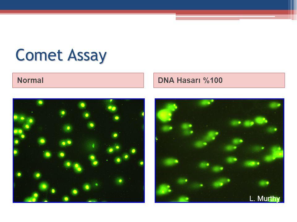 Comet Assay NormalDNA Hasarı %100 L. Murthy