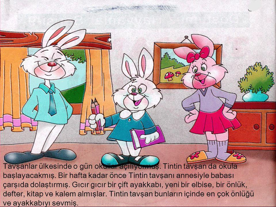 Tavşanlar ülkesinde o gün okullar açılıyormuş. Tintin tavşan da okula başlayacakmış. Bir hafta kadar önce Tintin tavşanı annesiyle babası çarşıda dola