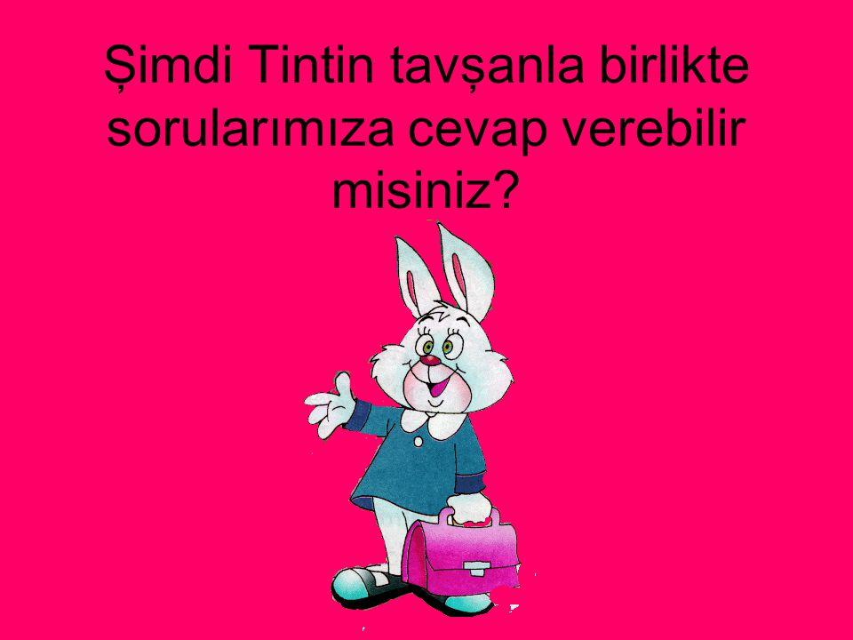 Şimdi Tintin tavşanla birlikte sorularımıza cevap verebilir misiniz?