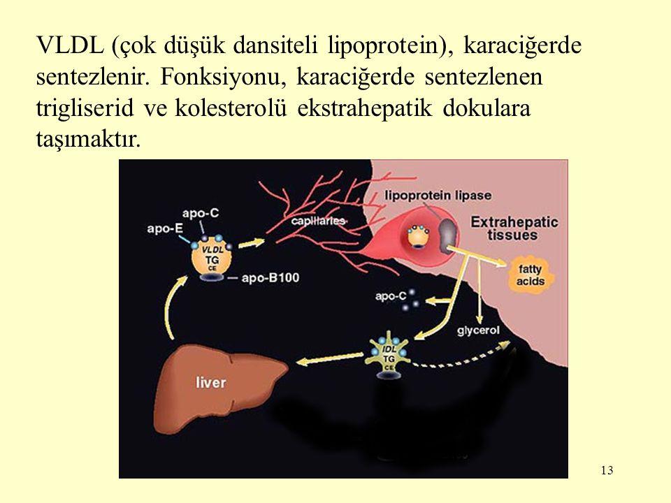 13 VLDL (çok düşük dansiteli lipoprotein), karaciğerde sentezlenir.