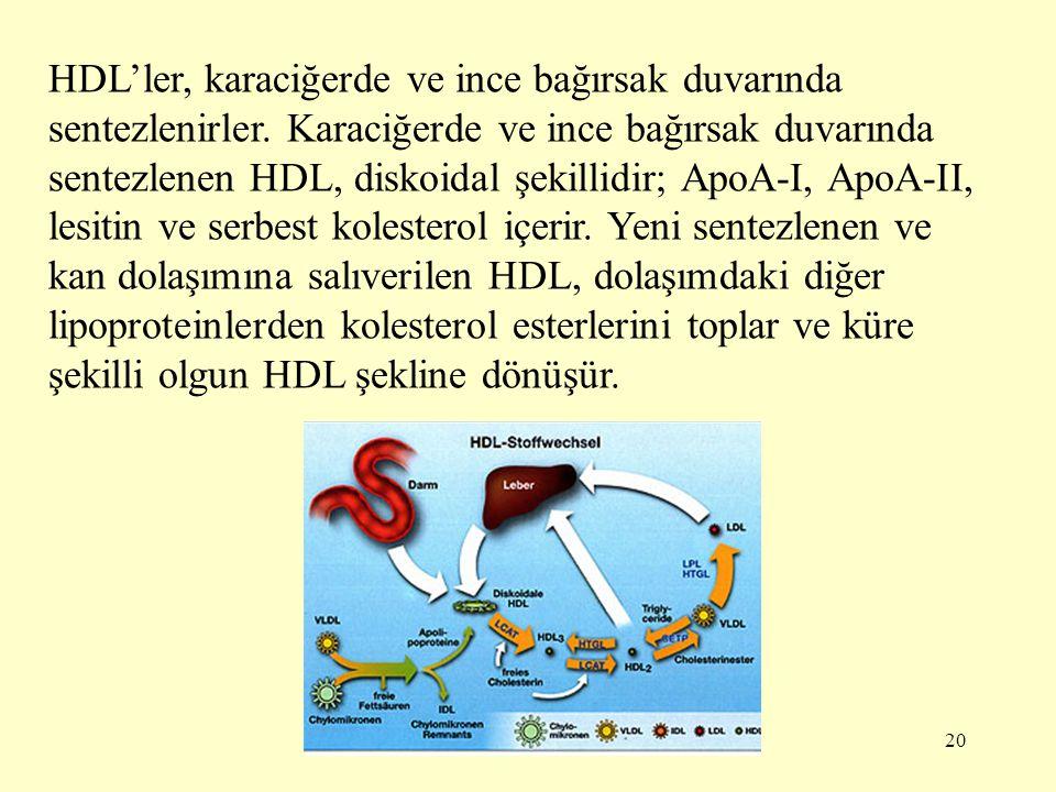 20 HDL'ler, karaciğerde ve ince bağırsak duvarında sentezlenirler.