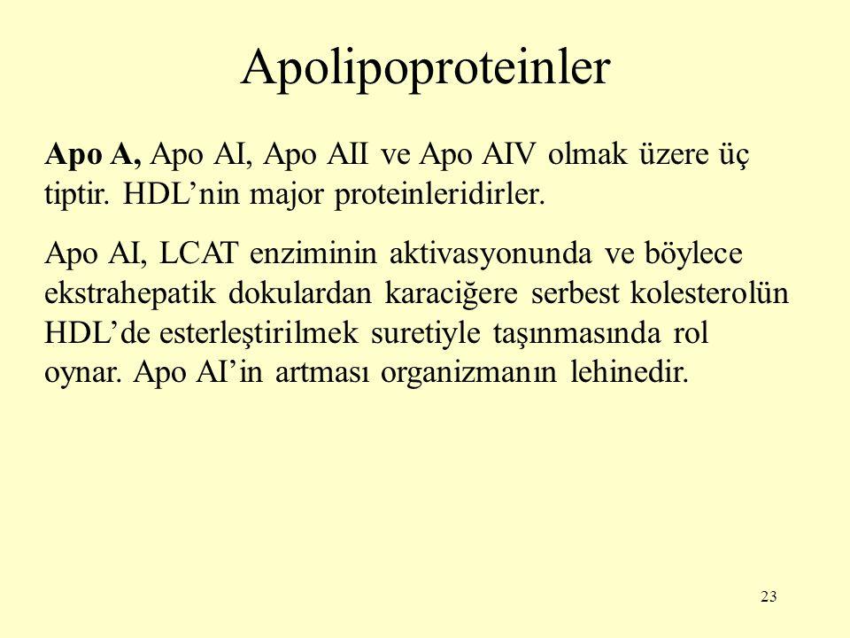23 Apolipoproteinler Apo A, Apo AI, Apo AII ve Apo AIV olmak üzere üç tiptir.