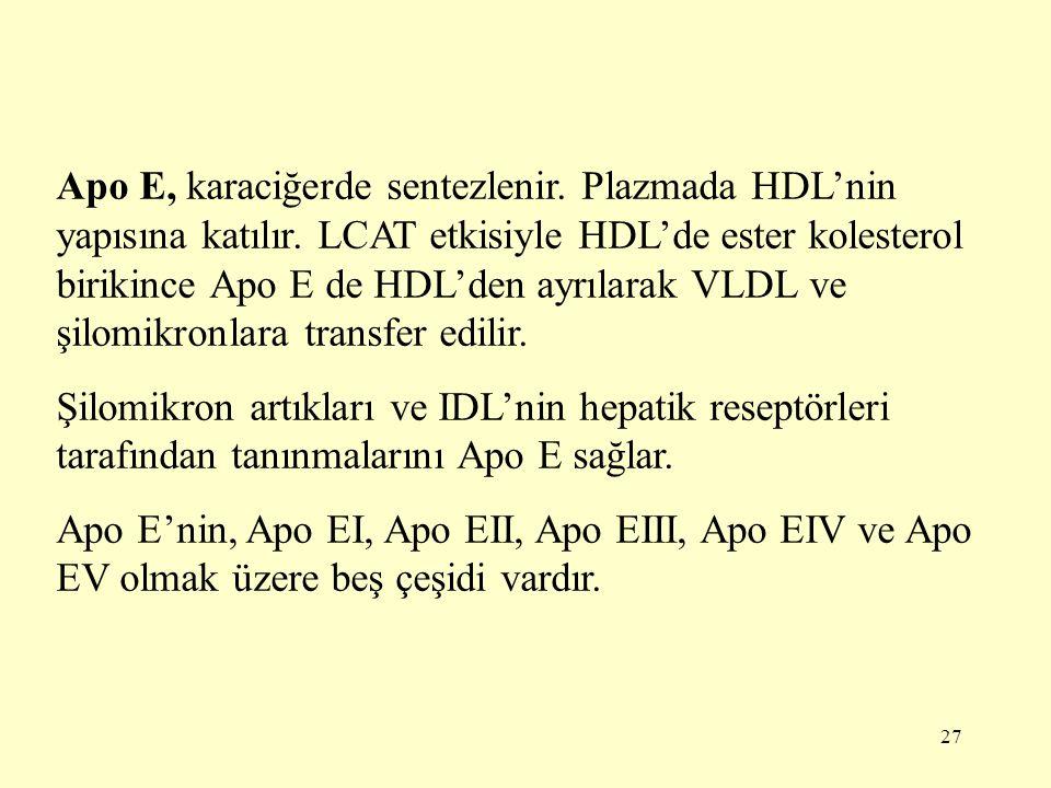 27 Apo E, karaciğerde sentezlenir.Plazmada HDL'nin yapısına katılır.